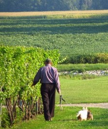 Man and dogs in vineyard