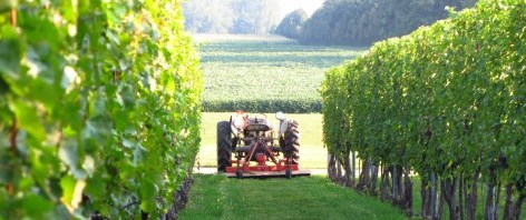 Tractor sitting between two rows of grape vines