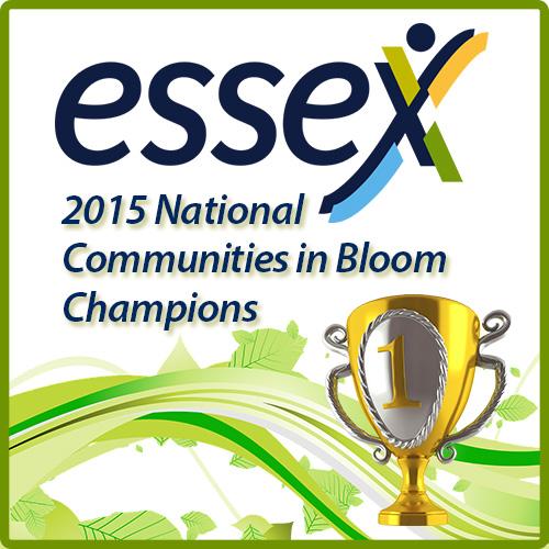 essex CIB winner logo